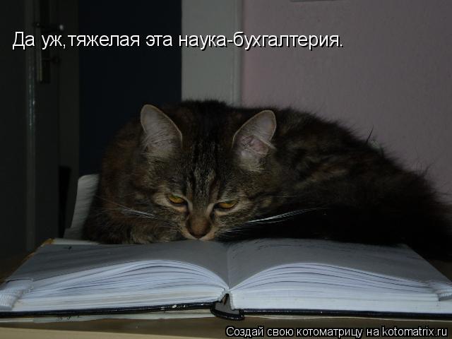 Котоматрица: Да уж,тяжелая эта наука-бухгалтерия.