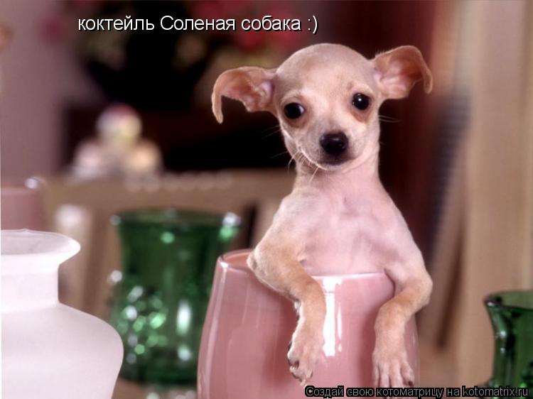 Котоматрица: коктейль Соленая собака :)