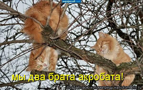 Котоматрица: мы два брата акробата!