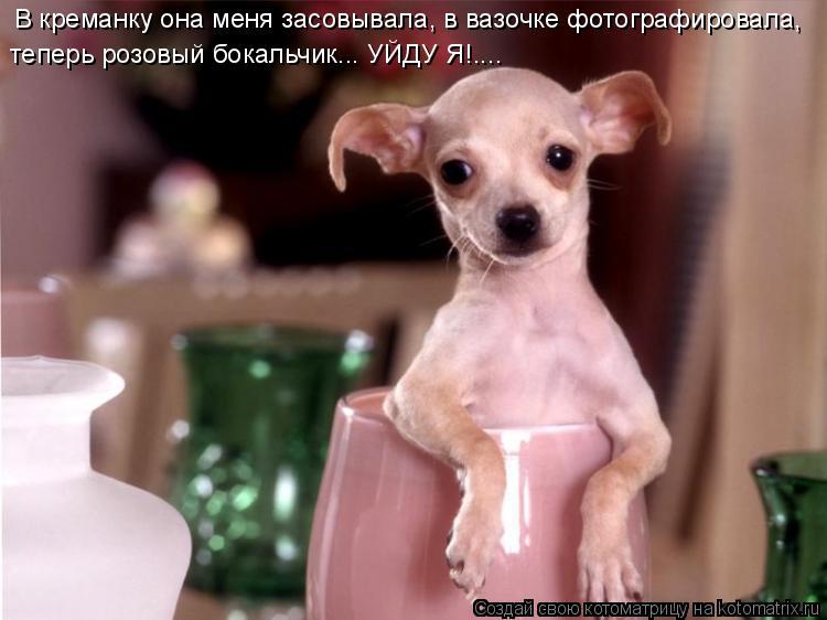Котоматрица: В креманку она меня засовывала, в вазочке фотографировала,  теперь розовый бокальчик... УЙДУ Я!....