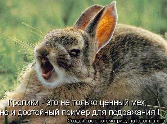 Котоматрица: Кролики - это не только ценный мех, но и достойный пример для подражания !