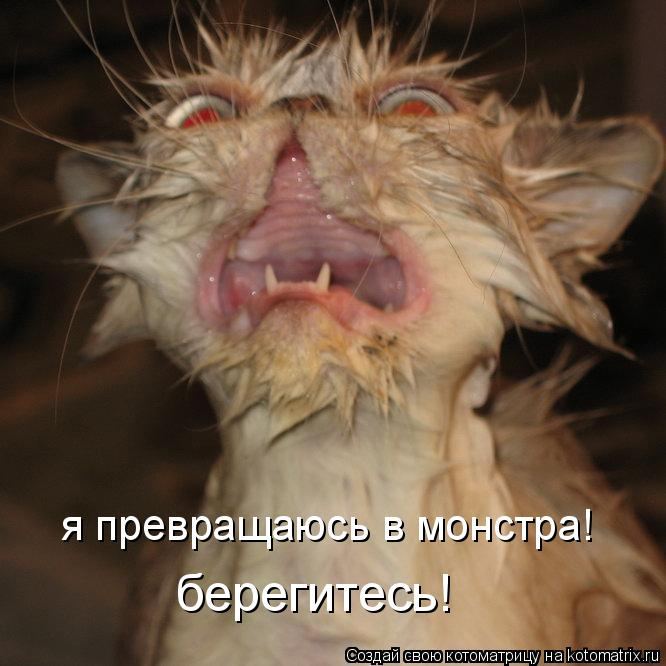 Котоматрица: я превращаюсь в монстра! берегитесь!