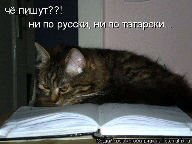 Котоматрица: чё пишут??! ни по русски, ни по татарски...