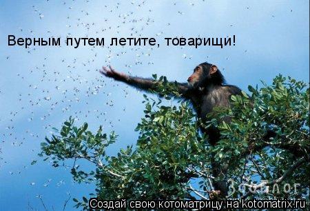 Котоматрица: Верным путем летите, товарищи!