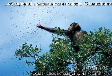 Котоматрица: ...обещанная американская помощь  Саакашвили