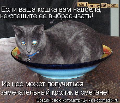 Котоматрица: Если ваша кошка вам надоела, не спешите ее выбрасывать! Из нее может получиться замечательный кролик в сметане!