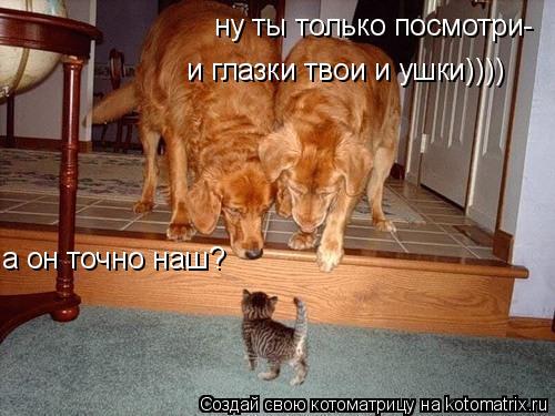Котоматрица: а он точно наш? ну ты только посмотри- и глазки твои и ушки))))