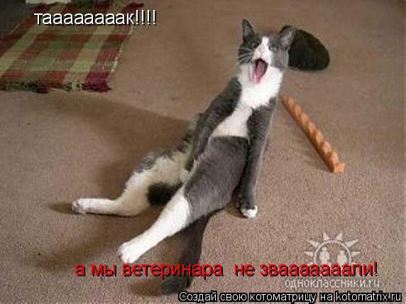 Котоматрица: таааааааак!!!! а мы ветеринара  не звааааааали!