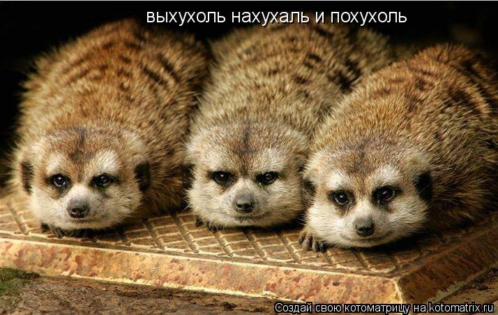 выхухоль фотографии:
