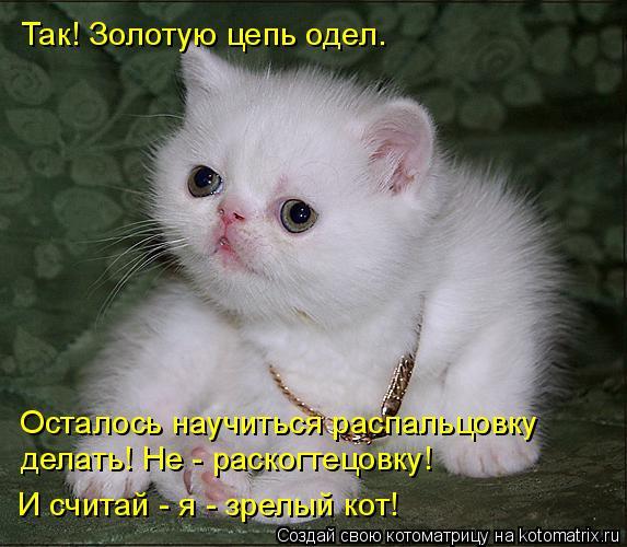 Котоматрица: Так! Золотую цепь одел. Осталось научиться распальцовку делать! Не - раскогтецовку! И считай - я - зрелый кот!