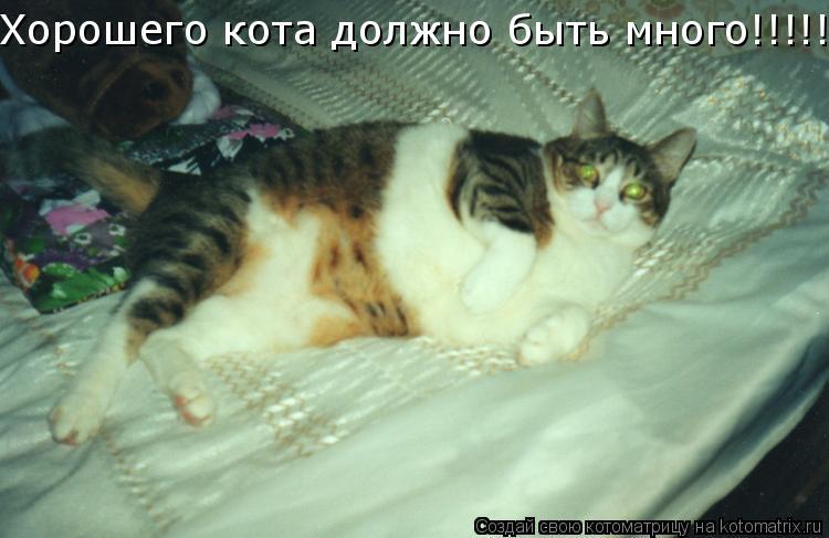 Котоматрица: Хорошего кота должно быть много!!!!!!