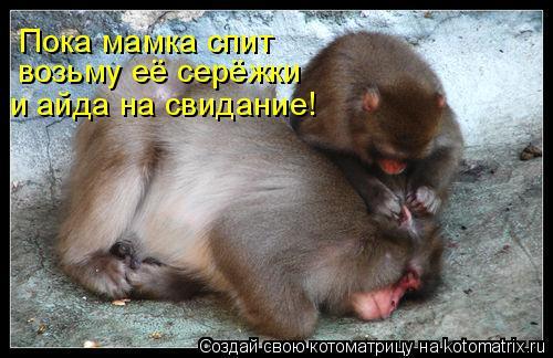 Котоматрица: Пока мамка спит возьму её серёжки и айда на свидание!