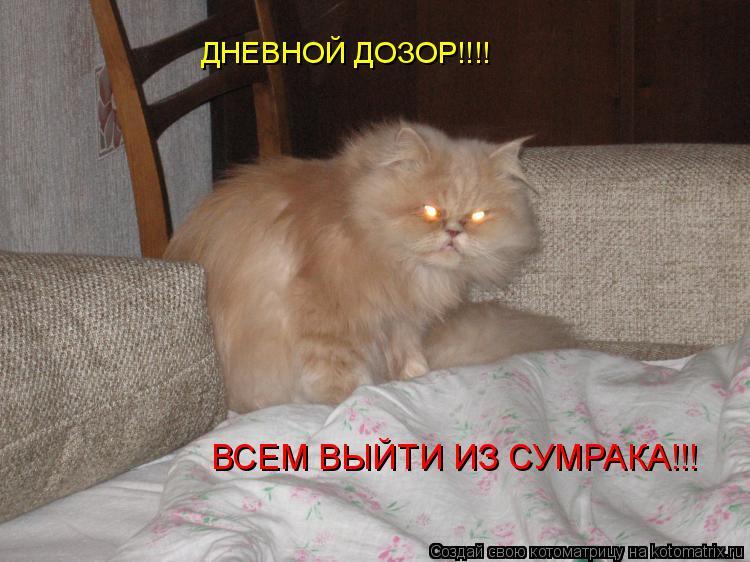 Котоматрица: ДНЕВНОЙ ДОЗОР!!!! ВСЕМ ВЫЙТИ ИЗ СУМРАКА!!!