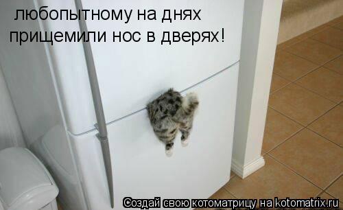 Котоматрица: любопытному на днях прищемили нос в дверях!