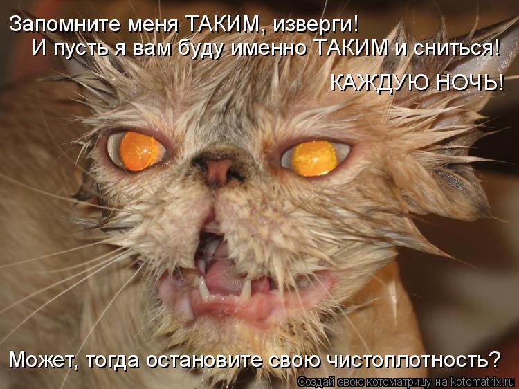 Котоматрица: Запомните меня ТАКИМ, изверги! И пусть я вам буду именно ТАКИМ и сниться! Может, тогда остановите свою чистоплотность? КАЖДУЮ НОЧЬ!