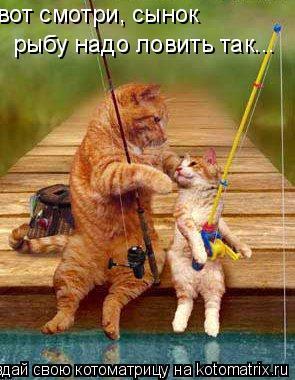 Котоматрица: вот смотри, сынок рыбу надо ловить так...