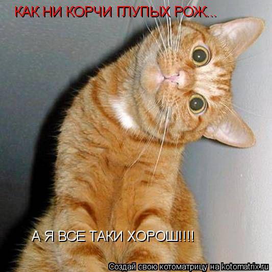Котоматрица: КАК НИ КОРЧИ ГЛУПЫХ РОЖ... А Я ВСЕ ТАКИ ХОРОШ!!!!