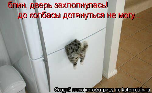 Котоматрица: блин, дверь захлопнулась! до колбасы дотянуться не могу...