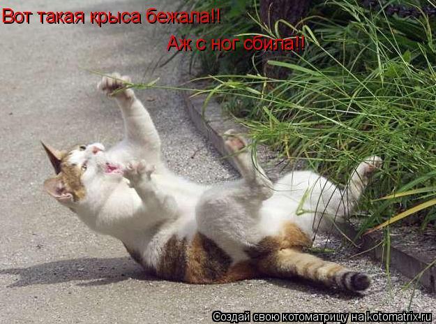 Котоматрица: Вот такая крыса бежала!! Аж с ног сбила!!