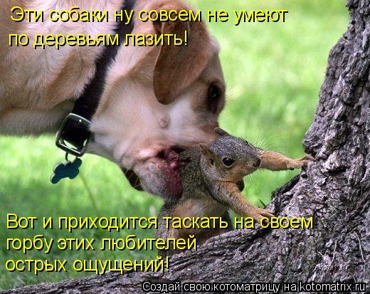 Котоматрица: Эти собаки ну совсем не умеют  по деревьям лазить! Вот и приходится таскать на своем  горбу этих любителей  острых ощущений!