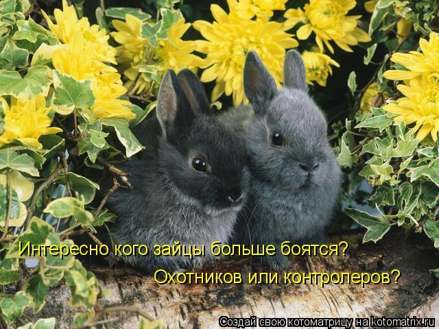Котоматрица: Интересно кого зайцы больше боятся? Охотников или контролеров?