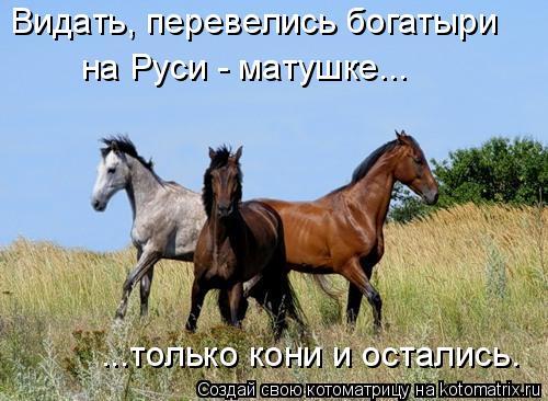 Котоматрица: Видать, перевелись богатыри ...только кони и остались. на Руси - матушке...