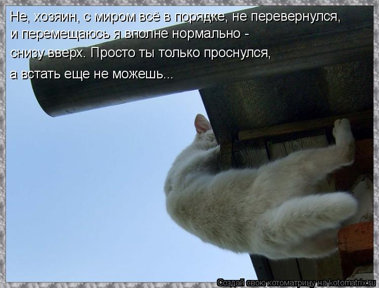 Котоматрица: и перемещаюсь я вполне нормально - снизу вверх. Просто ты только проснулся, а встать еще не можешь... Не, хозяин, с миром всё в порядке, не пере