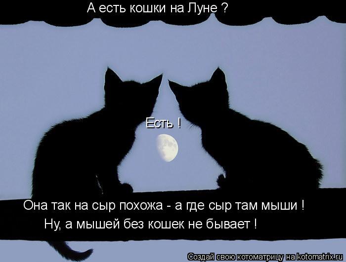 Котоматрица: А есть кошки на Луне ? Есть ! Она так на сыр похожа - а где сыр там мыши ! Ну, а мышей без кошек не бывает !