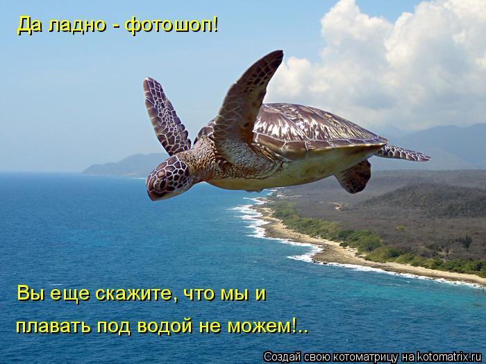 Котоматрица: Да ладно - фотошоп! Вы еще скажите, что мы и  плавать под водой не можем!..