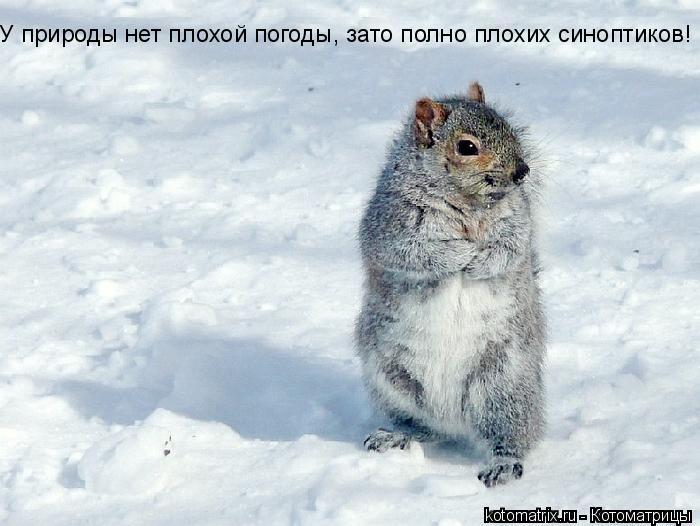 Котоматрица: У природы нет плохой погоды, зато полно плохих синоптиков!