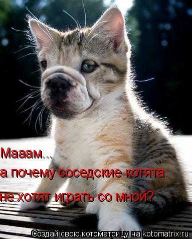Котоматрица: Мааам... а почему соседские котята не хотят играть со мной?