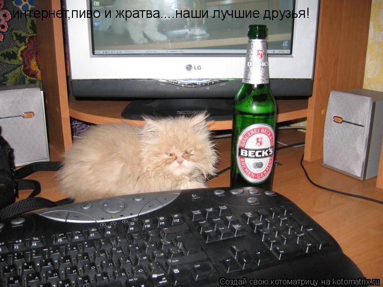 Котоматрица: интернет,пиво и жратва....наши лучшие друзья!