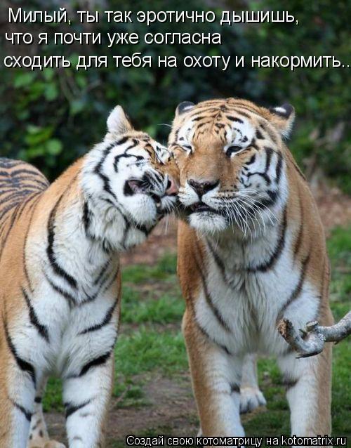 Котоматрица: Милый, ты так эротично дышишь, что я почти уже согласна сходить для тебя на охоту и накормить...