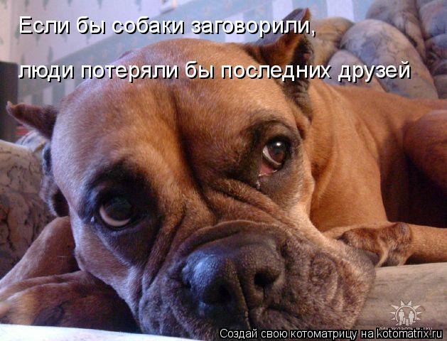 Котоматрица: Если бы собаки заговорили,  люди потеряли бы последних друзей