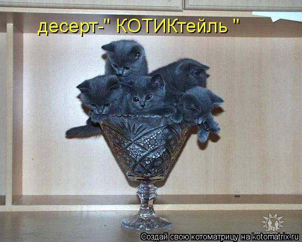 """Котоматрица: десерт-"""" КОТИКтейль """""""