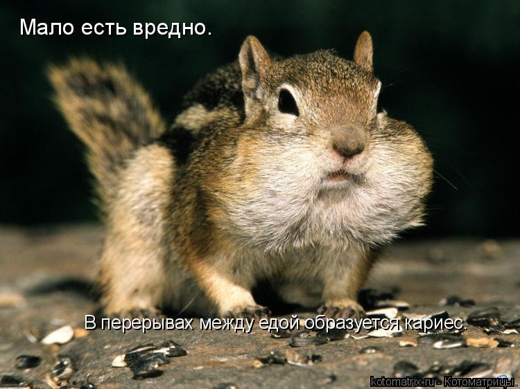 Котоматрица: В перерывах между едой образуется кариес. Мало есть вредно.