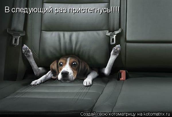 Котоматрица: В следующий раз пристегнусь!!!!
