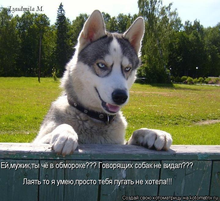 Котоматрица: Лаять то я умею,просто тебя пугать не хотела!!! Ей,мужик,ты чё в обмороке??? Говорящих собак не видал???