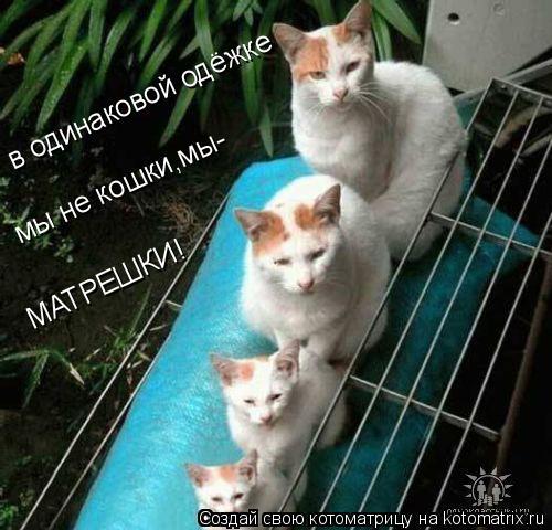 Котоматрица: в одинаковой одёжке мы не кошки,мы- МАТРЕШКИ!