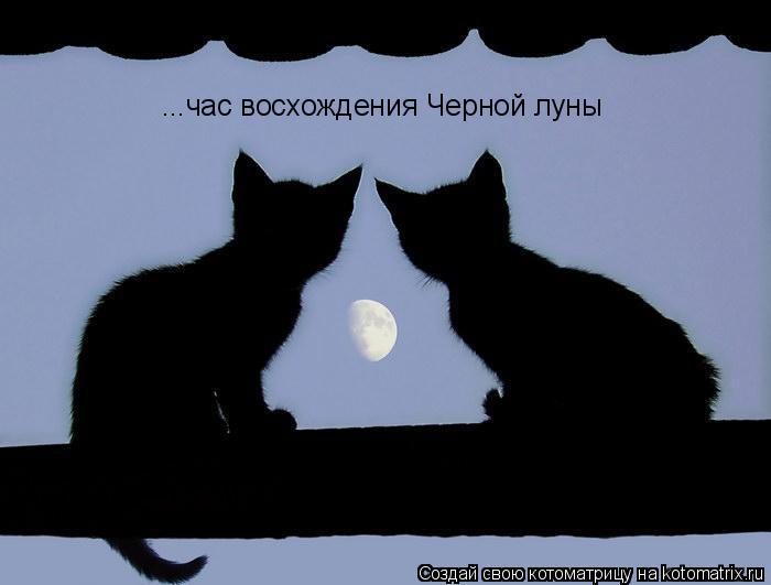 Котоматрица: ...час восхождения Черной луны