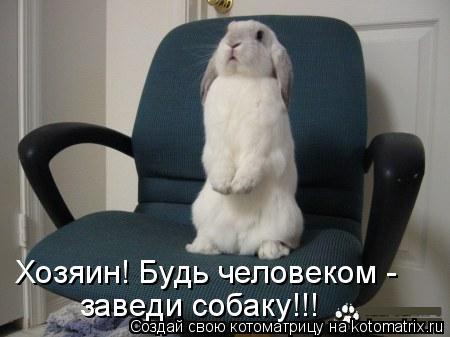 Котоматрица: Хозяин! Будь человеком - заведи собаку!!!