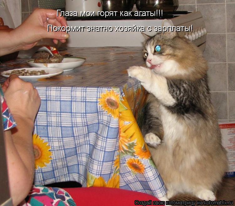 Котоматрица: Глаза мои горят как агаты!!! Покормит знатно хозяйка с зарплаты!