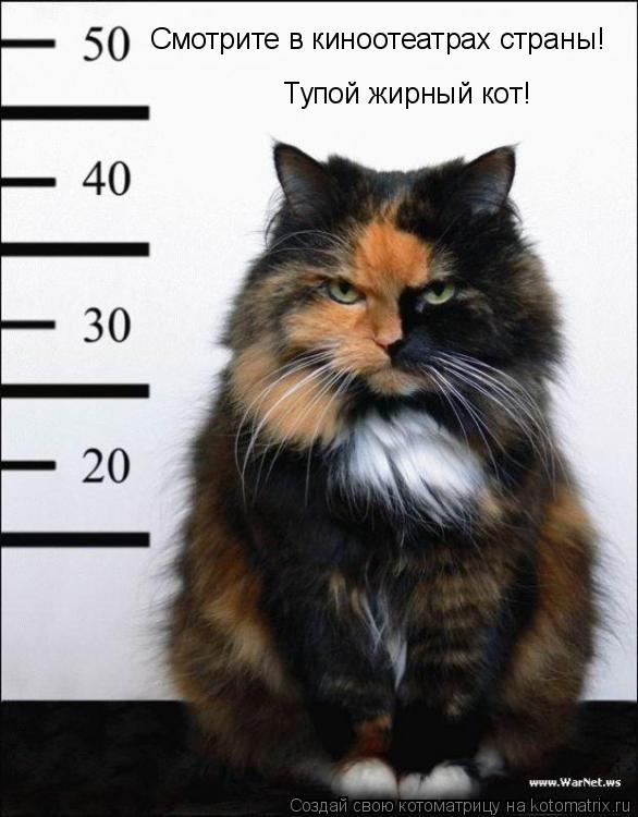 Котоматрица: Смотрите в киноотеатрах страны! Тупой жирный кот!