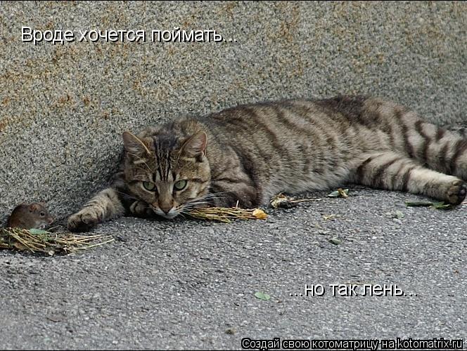 Котоматрица: Вроде хочется поймать... ...но так лень...