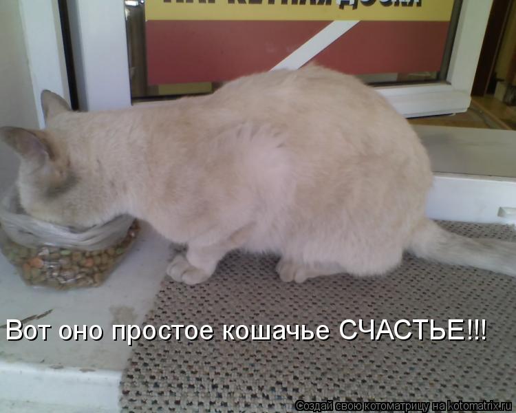 Котоматрица: Вот оно простое кошачье СЧАСТЬЕ!!!