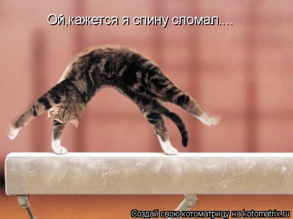 Котоматрица: Ой,кажется я спину сломал....