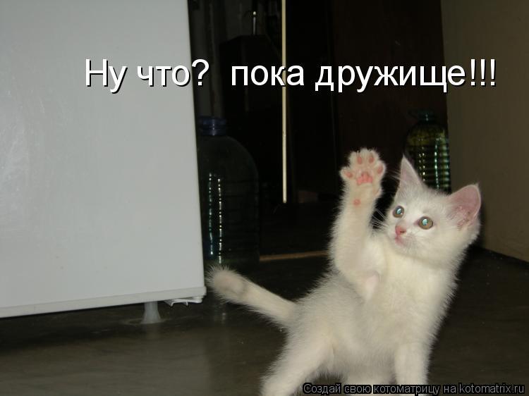 Котоматрица: Ну что?  пока дружище!!!