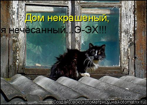 Котоматрица: Дом некрашеный, я нечёсанный...Э-ЭХ!!!