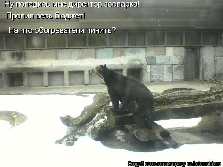 Котоматрица: Ну попадись мне директор зоопарка! Пропил весь бюджет! На что обогреватели чинить?