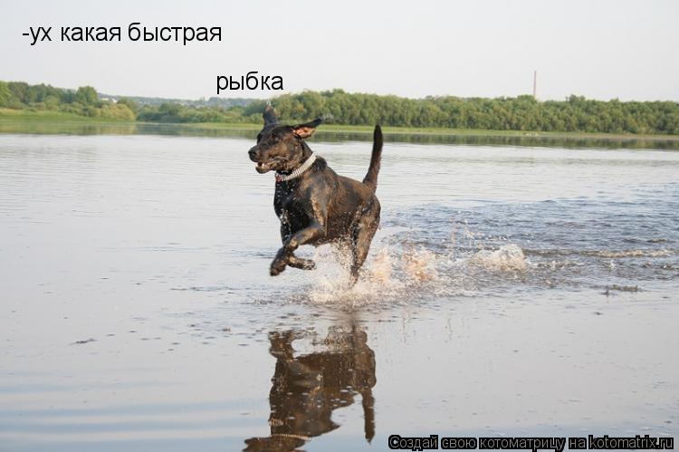 Котоматрица: -ух какая быстрая рыбка